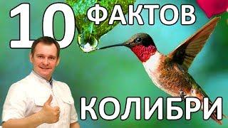 10 ФАКТОВ О КОЛИБРИ. УДИВИТЕЛЬНАЯ ЧУДО-ПТИЧКА.