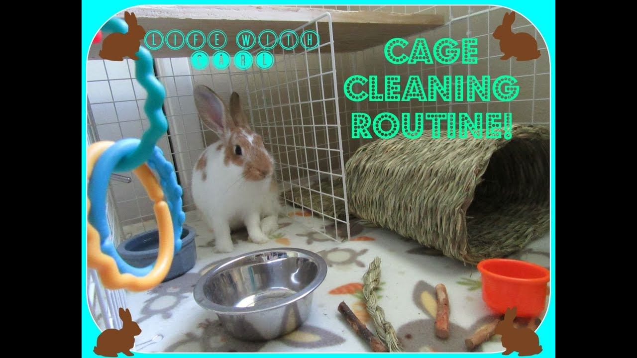 Bunny Condo Cage Cleaning Routine   YouTube