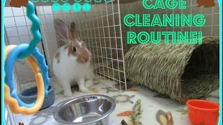 Bunny Condo Cage Cleaning Routine