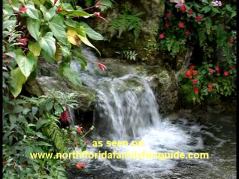 Butterfly Rainforest - Gainesville, Florida