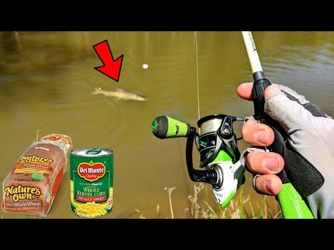 DUMB BAIT Catches GIANT MYSTERY FISH (CRAZY Fight!)