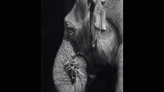 Dibujo a lápiz / Pencil drawing Elefante/ Elephant