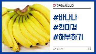 (바나나 해부하기 2탄) 현미경으로 바나나를 들여다 보…