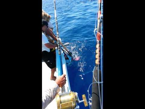 Waikiki dive and sport fishing