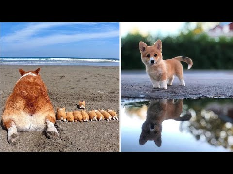 AWW CUTE BABY ANIMALS Videos Compilation cutest moment of the animals – Soo Cute! #40