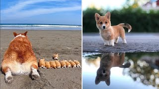 AWW CUTE BABY ANIMALS Videos Compilation cutest moment of the animals - Soo Cute! #40