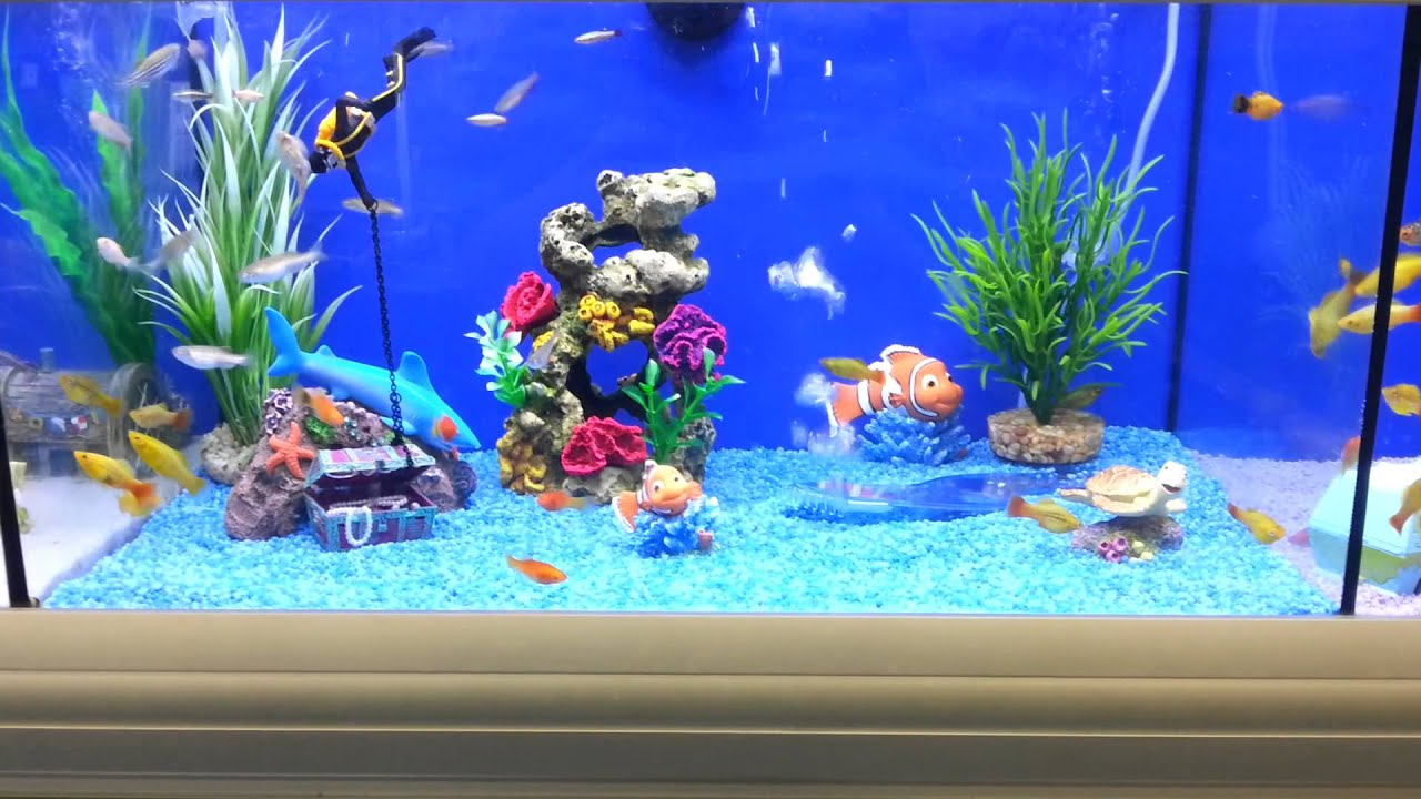 brilliant fish tank for kids youtube. Black Bedroom Furniture Sets. Home Design Ideas