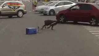 Помойка собаку не остановит)