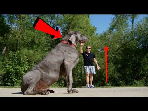 इसकी कीमत आपका दिमाग हिला देगी top 5 expensive dog breeds in the world