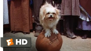 Lassie Come Home (7/10) Movie CLIP - The Tootsie & Lassie Show (1943) HD