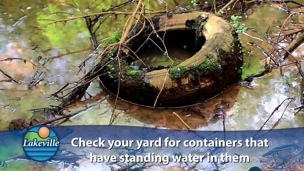 Controlling Mosquitos in Your Backyard - June 2019 - YouTube