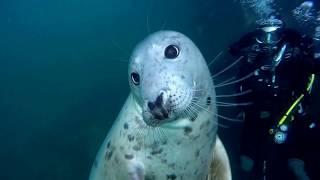 Friendly Seals!