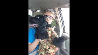Собака едет на дачу) Черная Дженни.