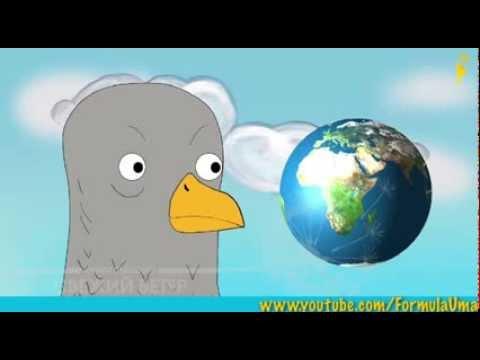 Как учили почтовых голубей