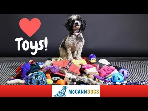 Teach Your Dog To LOVE Playing With Toys And How To Tug!
