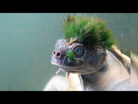 Why Everyone Is Talking About The Punk Turtle? | Daily Planet