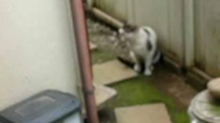 メスの猫とオスの猫が喧嘩するところです.