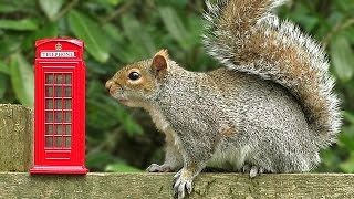 Videos for Cats to Watch - Squirrels and Birds at The Forest Phone Box