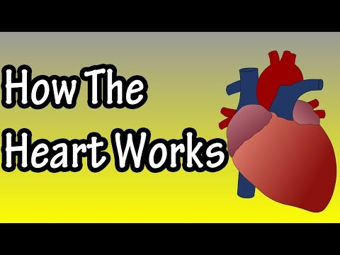 how-the-heart-functions-and-pumps-blood---how-the-heart-works---part-and-structure-of-the-heart