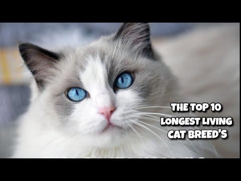 TOP 10 Longest Living Cat Breeds