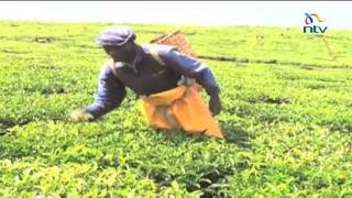 Kenyan tea farmers disappointed by the 2016\2017 budget