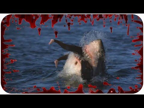 Видео как акула съедает человека