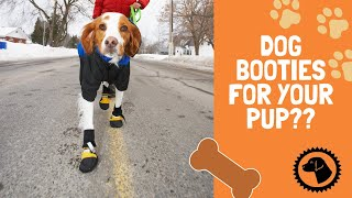 BOOTIES?  To Wear or Not To Wear Dog Boots In Winter | DOG BLOG 🐶 Brooklyn's Corner