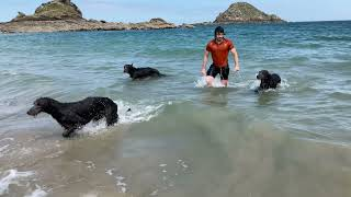 Our Deerhounds swimming on the ocean
