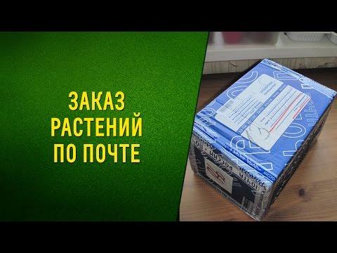 Заказ растений по почте