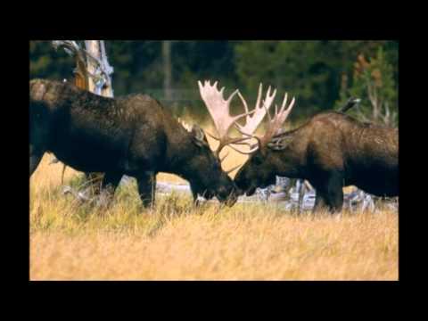 Fauna Of Grand Teton National Park