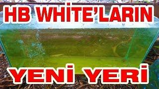 HB WHİTE LEPİSTESLERİN YENİ AKVARYUMU , Havuzun son durumu , albino ful red , su piresi,guppy