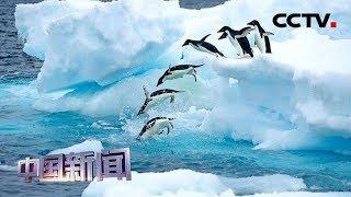 [中国新闻] 自然资源部开放赴南极长城站旅游申请 | CCTV中文国际