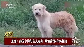 [今日亚洲]速览 重逢!泰国小狗与主人走失 原地苦等4年终相见| CCTV中文国际