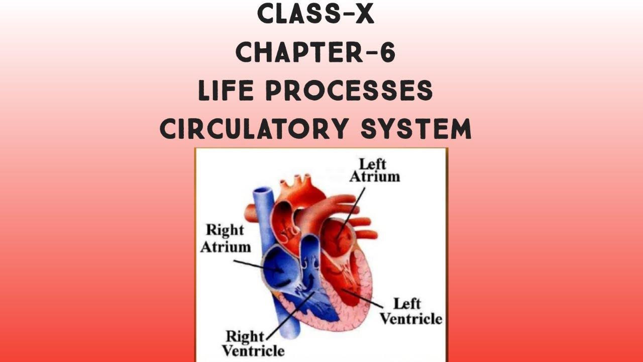 Life Processes 2 - Blood Circulation: CBSE Class 10 X ...