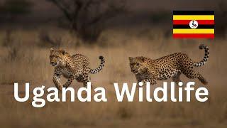 QUEEN ELIZABETH NATIONAL PARK // TRIP TO UGANDA // DAY 2 (2017)