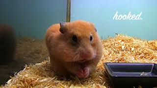 UNBELIEVABLE MOMENTS CAUGHT ON CAMERA!