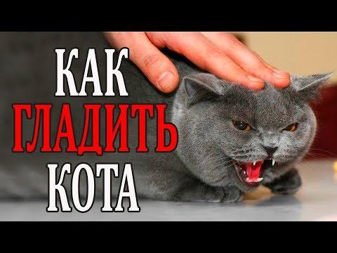 Гладим кота ПРАВИЛЬНО. Как избежать царапин и укусов.