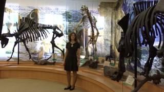 Пещерный медведь в музее Городская Дума. Город Тюмень в проекте Музеи Сибири.138