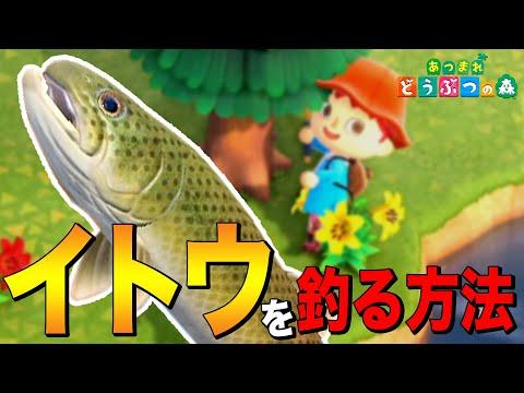 イトウ釣り方