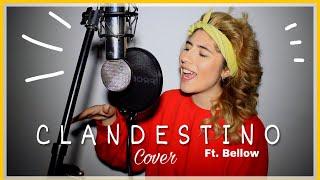 Baixar CLANDESTINO - Shakira ft. Maluma (Cover acústico) | Alix Escobar & Below