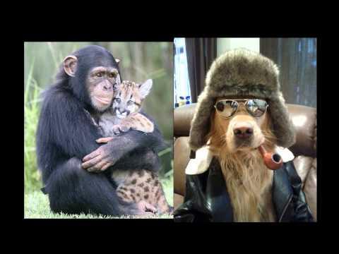 смешные фото животных, приколы с животными. - YouTube