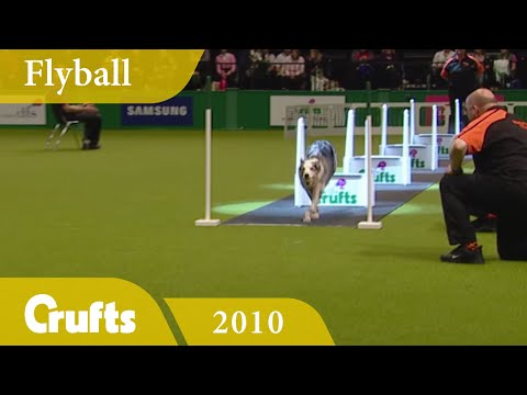 Flyball - Team Finals 2010 | Crufts Dog Show