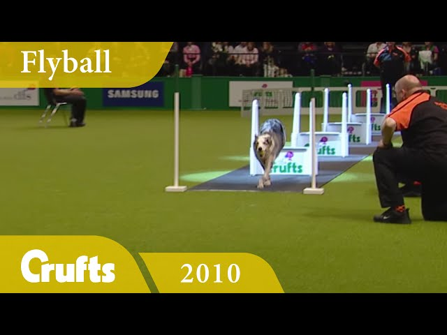 Flyball - Team Finals 2010 | Crufts Classics