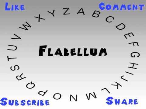 Header of flabellum