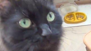 Кошки просят, чтоб их погладили / кот просит ласки апрель 2016