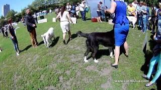 1 Выставка собак, Харьков, Стадион Пионер, май 2019, КСУ