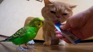 Cat and bird   an inseparable couple