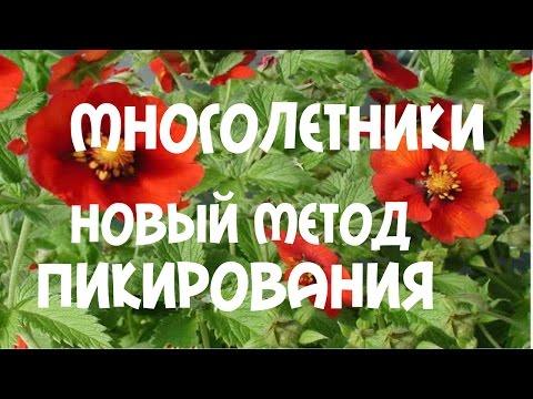 Лапчатка - Декоративные растения - Усадьба - Библиотека