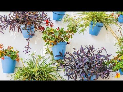 Clique e veja o vídeo Tipos de Jardim Vertical - Curso a Distância Jardins Verticais