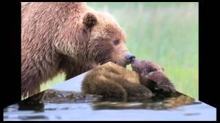 25 кадров , когда животные-родители повели себя совсем как люди